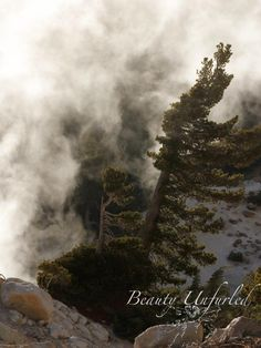 steam pushes the small pine to the side  award-winning photography by Beauty Unfurled www.beautyunfurled.com