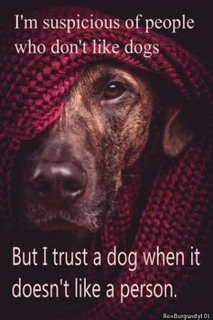 I'm suspicious of people who don't like dogs but I trust a dog when it doesn't like a person.