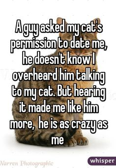 A guy asked my cat's permission to date me, he doesn't know I overheard him talking to my cat. But hearing it made me like him more,  he is as crazy as me