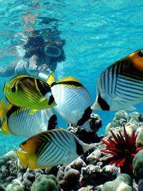 Arrecifes de #Coral, #Adrenalina, #Saonadreams Isla #Catalina