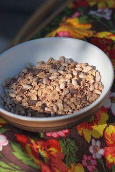 - A Seasonal Veg Table: Cacao Nibs, Raw Chocolate and Cocoa Muesli Cocoa Chocolate, Homemade Chocolate, Chocolate Recipes, Cacao Powder Benefits, Muesli Recipe, Cacao Nibs, Healthy, Breakfast, Food