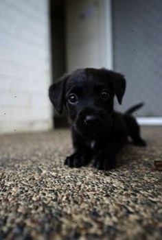 Cute Animals by TinyCarmen