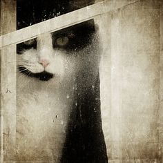 """""""Orestes at the Window"""" by Pat (Bailey Road)"""
