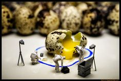 """Case File: Humpty Dumpty  """"Looks like blunt force trauma.... serious fracturing and damage to internal organs... Yup, they will never put this one back together again!.....""""  Cue CSI theme music! ♪ ♫ ♪ ♫..... :D"""