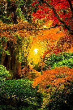 Sunrise through the trees in the Japanese Gardens of Portland. The Portland Japanese Garden is considered to be the most authentic garden outside of Japan. Beautiful World, Beautiful Places, Beautiful Pictures, Foto Nature, Autumn Scenes, Fall Pictures, Nature Pictures, Amazing Nature, Beautiful Landscapes