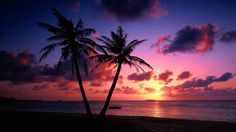 New palm tree sunset wallpaper paradise ideas Tree Sunset Wallpaper, Beach Wallpaper, Scenery Wallpaper, Wallpaper Pictures, Nature Wallpaper, Hd Wallpaper, Paradise Wallpaper, Laptop Wallpaper, Palm Tree Sunset