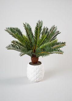 Cycas in Textured Pot (40cm)