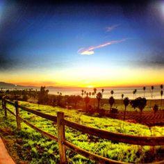 Morning at Santa Barbara City College (SBCC) Santa Barbara City College, San Francisco, Study, California, Sunset, Lifestyle, Places, Photography, Travel