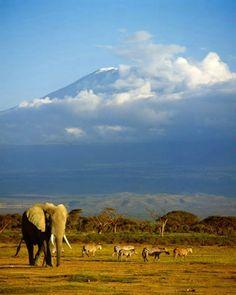 Elephant passing Mt. Kilamanjaro, Amboseli Game Reserve, Kenya    See you in two years Mr. Elephante!