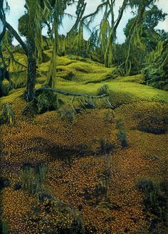 beautiful natural moss covered forest floor