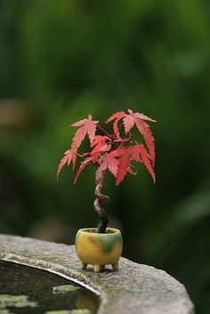 Life's appealing small packages:  bonsai