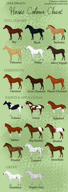 "These are all right except that ""white"" horse isn't white it's grey. grey skin means a grey horse pink skin means a white horse and the splashed white isnt rightbat all. Hidalgo was a splashed white it litterally looks like paint has been splashed onto them and the liver chestnut doesn't have a flaxen mane and tail it's the same color as their body Horse Colour Chart"