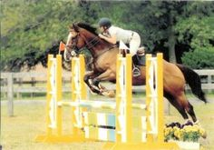 """""""Learn to ride him to the base of the jump and he will lift his front end better."""" - Carol Dean-Porter"""