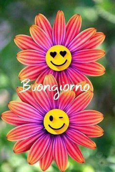 Osteospermum Light C Beautiful gorgeous pretty flowers - Pflanzen . - Osteospermum Light C Beautiful gorgeous pretty flowers – Pflanzen – - Flowers Nature, Exotic Flowers, Amazing Flowers, My Flower, Colorful Flowers, Flower Power, Beautiful Flowers, Beautiful Gorgeous, Pink Flowers