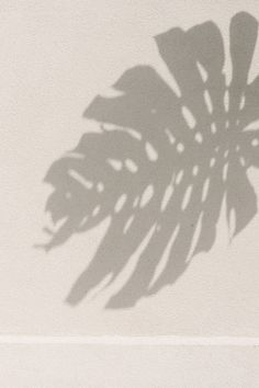 light and shadow photography inspiration monstera leaf summer mood botanic inspiration Light And Shadow Photography, Minimal Photography, Photography Poses, Picture Wall, Photo Wall, Cream Aesthetic, Aesthetic Light, Nature Aesthetic, Sun Blinds