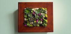 Succulent Wall Garden DIY.