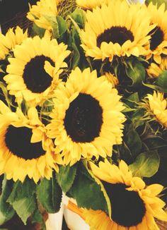 Are anyone's sunflowers flowering yet? #homesfornature