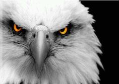 Return of White...Eagle