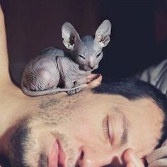 Tiny adorable guardian 😍😩 📸: @Unknown  Is your Sphynx from outer space? ✨😎 👕Get our Limited Edition Sphynx Cat Clothing Now --> LINK IN DESCRIPTION!  Multiple colors available 👌🏻 ONLY 5 DAY UNTIL SALE ENDS!!! • • • #nakedpussies #sphynx #sphynxcats #catsofinsta #pets #petstagram #nakedpussy #nakedcat #cute #adorable #tee #bigeyes #beautiful #paw #adorable #animals #animallover #nudecat #aww #nakedbabies  #catstagram #spacecat