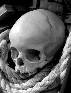 Human Skeleton, Human Skull, Evil Skull Tattoo, Skull Reference, Totenkopf Tattoos, Skull Island, Vanitas, Dark Fantasy Art, Ink Art