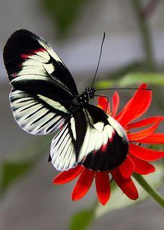 Butterfly by Annett Meyer