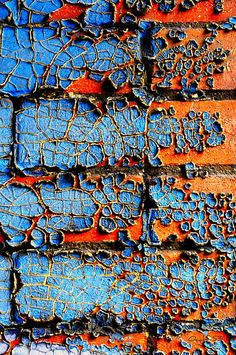 4 alligators tails   Flickr - ocalf-53