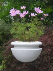 Orchard Bowl White Planter @ Lawn Patio Barn.com
