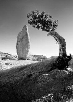 Surf Discover Ansel Adams Yosemite pine tree and boulder original Sierra Mountains black & white monochrome fine art print poster photograph Ansel Adams Photography, Couple Photography, Nature Photography, Urban Photography, Color Photography, Portrait Photography, Berlin Photography, Wedding Photography, School Photography