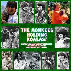 The Monkees Memes David Jones Mike Nesmith Peter Tork Micky Dolenz 1960's Monkees Funny Monkees Facts Fun Facts Monkees Trivia  InductTheMonkees Rock And Roll Hall Of Fame Monkees Koalas