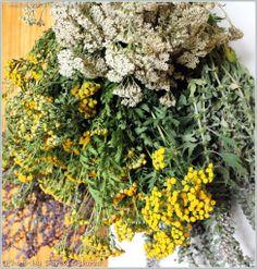 ТЫСЯЧЕЛИСТНИК и правила заготовки лекарственных трав для начинающих | блог дорис ершовой