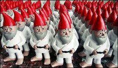 Judo Gnomes - Home