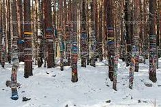 sacred forest arshan village - Google Search