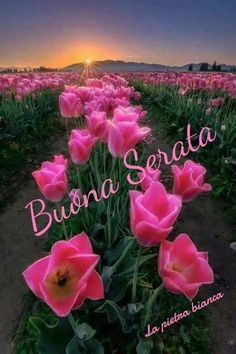 Good Evening Wishes, Joelle, Beautiful Pictures, Plants, Thinking About You, Tips And Tricks, Italian Greetings, Pretty Pictures, Plant