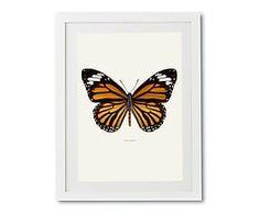Print in lijst Danaus Plexippus, multicolour, 30 x 40 cm