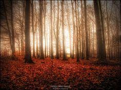 Wild Forest Landscapes | HDR Landscapes Masontown, WV