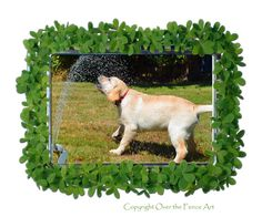 Dog Card YELLOW LABRADOR  PUPPY plays in lawn by overthefenceart