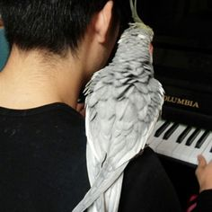 Adopt a cockatiel! Parrots are wonderful companions, but it is a two-way relationship. If you invest well, instead of #foreveralone, you can be #neveralone. :)