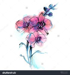 Three Purple Orchid, Branch, Flower, Watercolor Sketch On White Background, Vector Illustration - 237024682 : Shutterstock