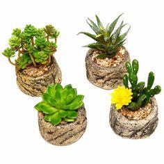 Small-potted-bonsai-font-b-Mini-b-font-font-b-succulent-b-font-plants-font-b.jpg (1000×1000)