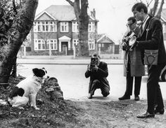 Pictures of Pickles the Dog Poses for Photographers in 1966