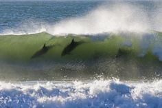4 dolphins