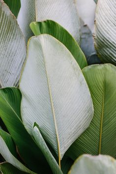 plants // annauitbeijerse