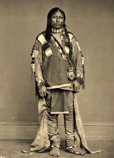 Ute native