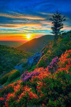 Science Discover Beautiful sunset and scenery. Beautiful Sunset Beautiful World Beautiful Images Image Nature Nature Photos Amazing Nature Belle Photo Beautiful Landscapes Beautiful Nature Photography Beautiful Nature Pictures, Beautiful Nature Wallpaper, Beautiful Sunset, Nature Photos, Amazing Nature, Beautiful World, Beautiful Landscapes, Beautiful Places, Images Of Nature