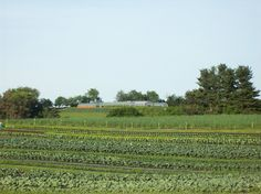 Dillner Family Farm in Gibsonia - possible CSA option