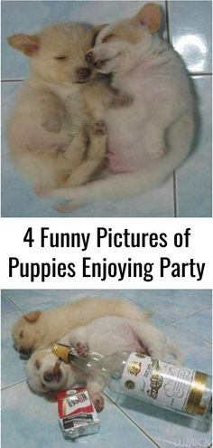 4 Funny Pictures of Puppies Enjoying Party Puppy Pictures, Funny Animal Pictures, Funny Animals, Life Memes, Weird, Funny Memes, Relationship, Puppies, Education
