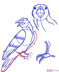 how to draw a raven step 5
