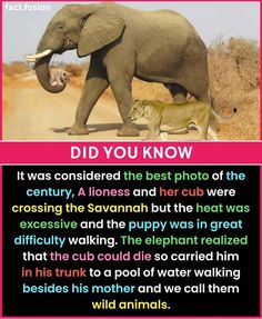 Incredible Facts About and Which Country Do You Know Better? Cute Funny Animals, Funny Animal Pictures, Cute Baby Animals, Animal Pics, Elephant Facts, Elephant Love, Wow Facts, Wtf Fun Facts, Beautiful Creatures