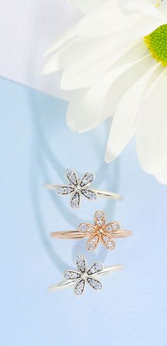 Do you prefer our daisy ring in PANDORA rose or sterling silver?
