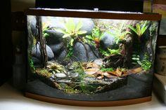 34 Best Vivarium Images Vivarium Reptile Enclosure